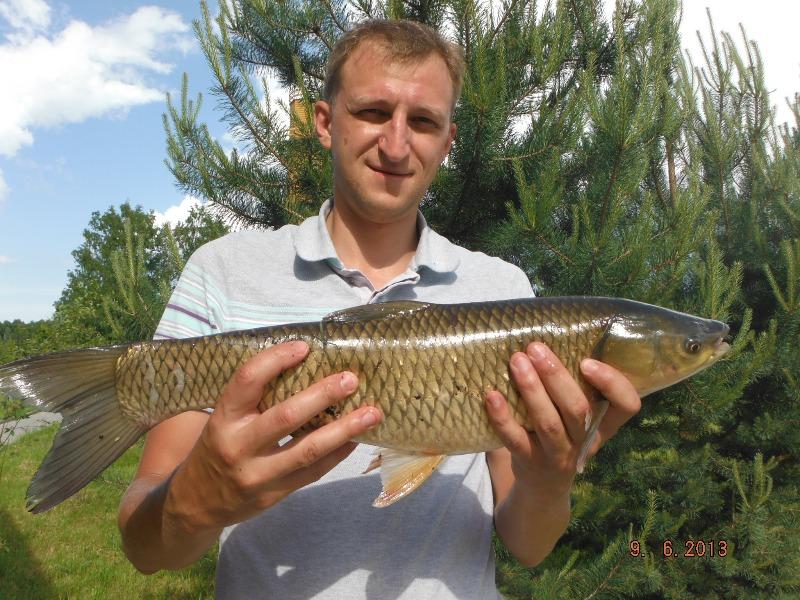 рыбалка на чеснаве сегодня
